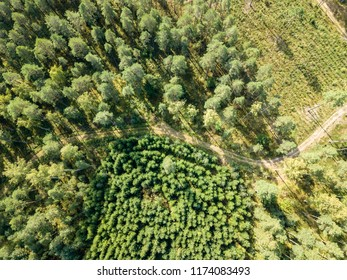 drone image. aerial view of rural gravel road in green forest and trees with shadows from above in sunny summer day. latvia