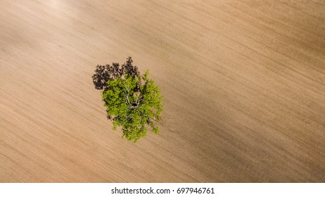 drone image. aerial view of rural area with freshly cultivated fields. green and brown with single isolated tree - panoramic image