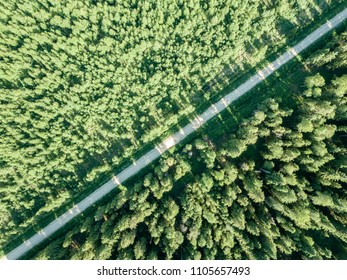 drone image. gravel road surrounded by pine forest from above. summer countryside in Latvia