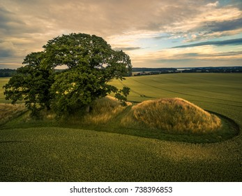 Drone image of oak trees on a small hill