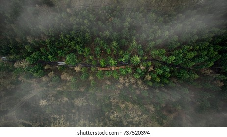 A drone image of timber logs lay on side of the forest road.