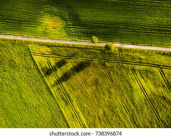 Drone image of two trees casting shadow on side of the road.