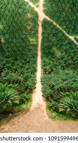 Drone Inception Oil Palm Estates