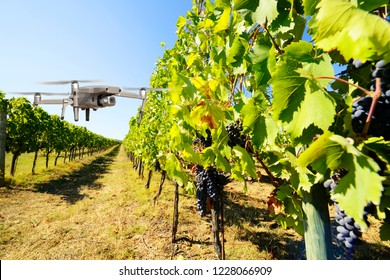 Drone inspecting vineyard