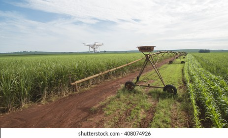 Drone monitoring a sugar cane field with pivot and some corn windrows - sunny day in Brazil