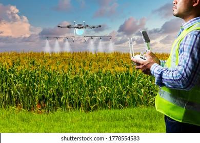 Drone operator for spray pesticide in corn field