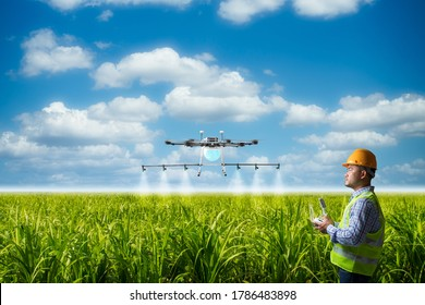 Drone operator for spray pesticide in sugarcane field with smart agriculture fast and convenient concept