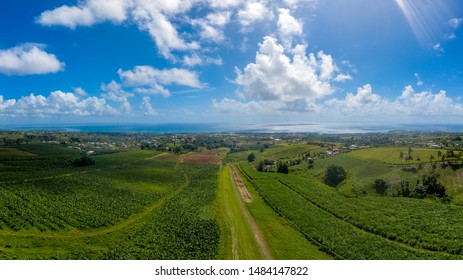Drone Panorama over a banana plant at Guadeloupe