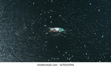 Drone photo of a boat, in the middle of the sea, with flying birds around. - Shutterstock ID 1670315944