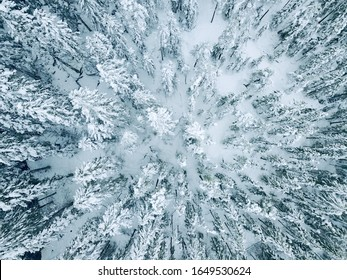 Drone photo of a Swedish Forrest Forrest in winter