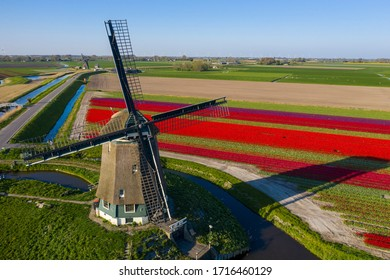 Drone photo of a typical Dutch windmill in the Berkmeerpolder in Holland. With behind that a field of red tulips in the evening sun.