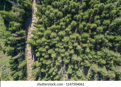 Drone photograph of rushing river through a forest of green pine trees.