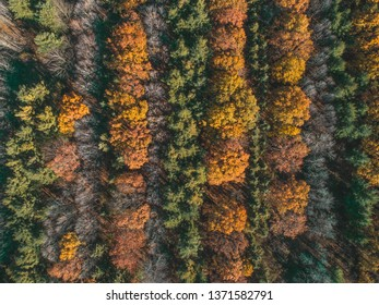 Drone Photography of a fall forest with beautiful autumn colors.