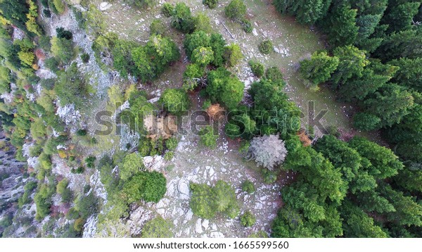 drone-photography-lush-pine-forest-600w-