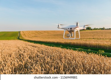 drone quad copter on yellow corn field