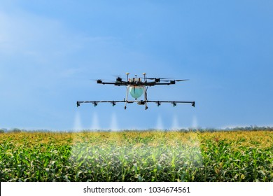 Drone spray pesticide in corn field