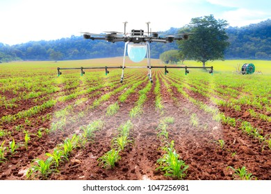 Drone spray pesticide at farm field