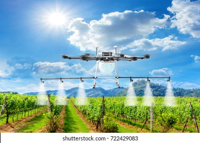 Drone spray pesticide in vineyards
