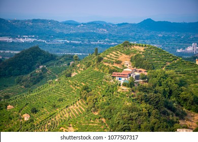 Drone vie of hills with vineyards, sunny day/sunset. Prosecco region in Valdobbiadene - Italy.