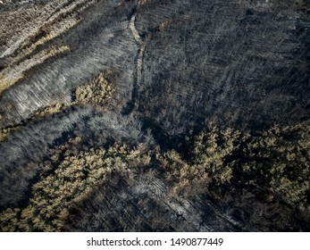 Drone view of a burnt forest. Dead trees after fire.