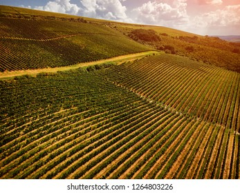 Drone view of a green summer vineyard at sunset