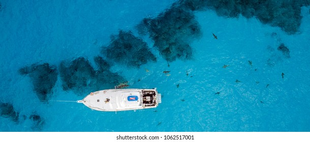 Drone View on Lemon and Caribbean Reef Sharks at Tigerbeach, Bahamas