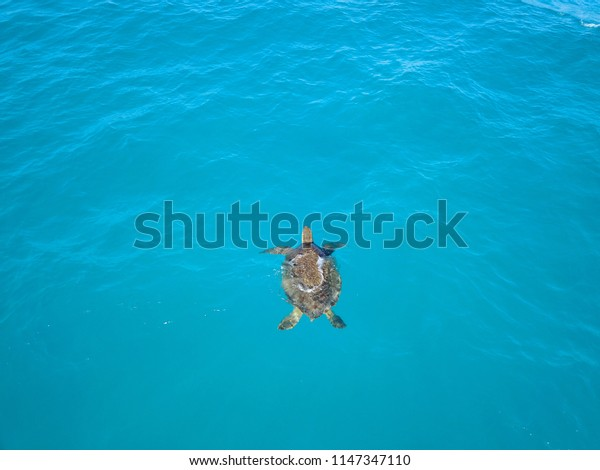 Drone View Of Sea Turtle