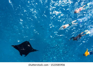 Drone view at snorkeling people they chase a Manta ray