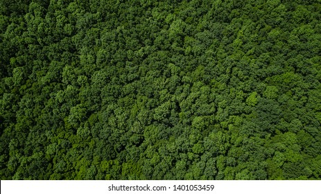 Drone's Eye View - aerial top down tree green background, Caucasus, Russia.