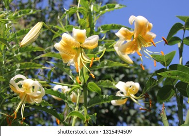 Drooping Flowers Images Stock Photos Amp Vectors Shutterstock
