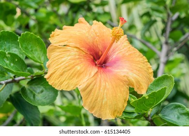 Droopy Flower Images Stock Photos Vectors Shutterstock