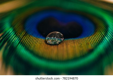 Drop on Peacock Feather