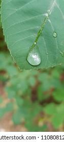 a drop of rain on a leaf