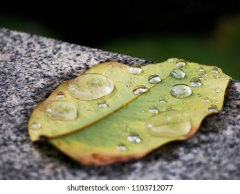 drop water on dry leaf