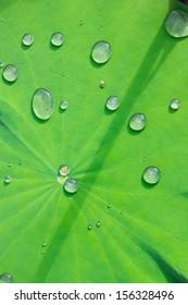 Drop water on the Lotus leaf
