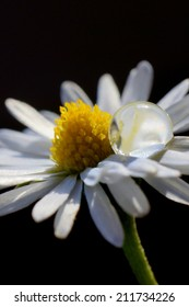 Droplet and Daisy