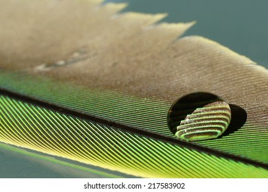 Droplet on feather