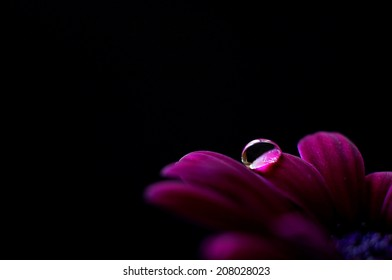 Droplet on flower petals and with a black background.