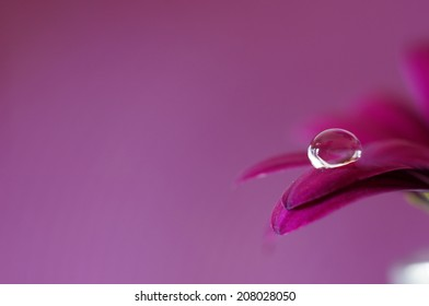 Droplet on flower petals and with a purple background. Monochrome purple.