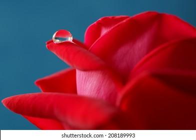 Droplet on a Rose's petals