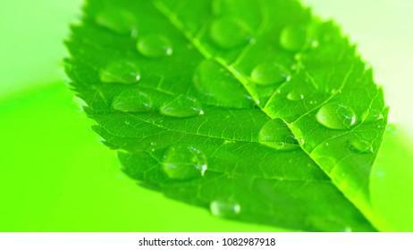 Droplets on green leaf