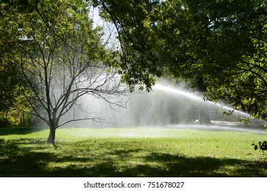 Droplets of water from a lawn sprinkler catch in a tree and shine in sunlight in Central Park, Manhattan