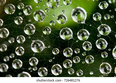 Droplets of water suspended on a spiderweb after a rainstorm.