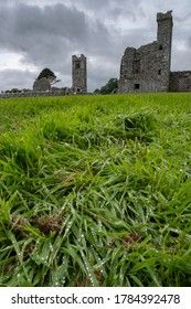 Drops of dew on the grass with ruins of Slane abbey in the background. Co. Meath, Ireland. July 2020