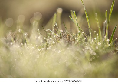 Drops of dew on a green grass bokeh background,  Grass. Sun. Soft Focus. Abstract Nature Background