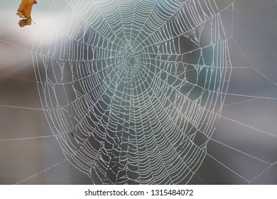 the drops of dew water on the spider's web