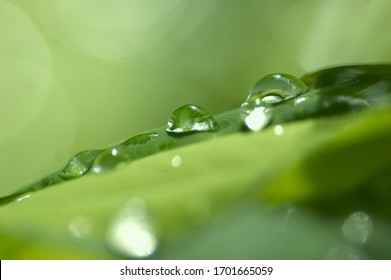 drops of morning dew on the leaves