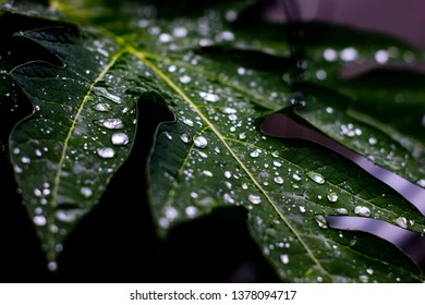 Drops on leaf in Garden After Rain. Natural Green Plants Using as Background or Wallpaper.