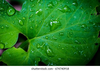 Drops on the leaves