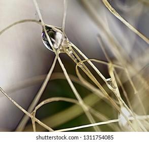Drops of water among sisal threads